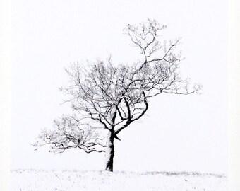 Lone Tree, Winter Landscape, Black and White, Square Wall Art, Nature Photography, Minimalist Art