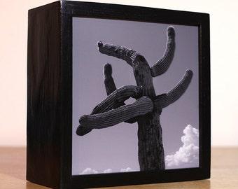 6x6 Cactus LED Photo Light