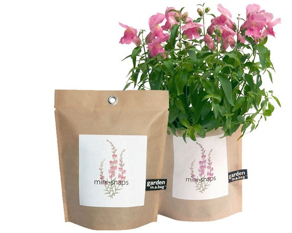 Snapdragon Garden in a Bag Self Contained Flower Garden