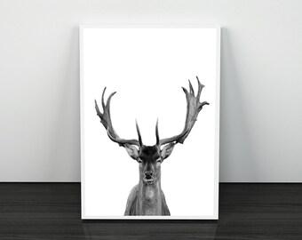 Deer Wall Art Print, Deer Head, Antlers, Woodlands Nursery Animal, Digital  Download