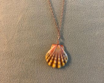Sunrise seashell necklace on rose gold chain