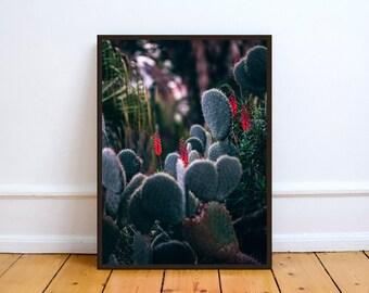 Cactus Red Flower,Art,Photo,Digital Download,Decor,Home,Office,Tropical,Dusk,Wood,Woods