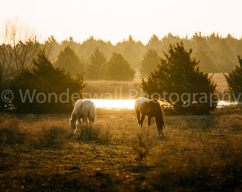 Golden Hour Horses - Digital Download