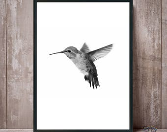 Hummingbird Print, Hummingbird Art, Hummingbird Wall Art, Colibri Print, Hummingbird Black White, Bird Prints, Colibri Photo, Colibri Poster