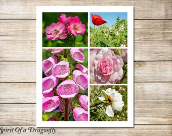 16x20 Storyboard Collage Template Photographer Template