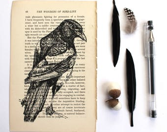 Magpie Print, Bird Print on Vintage Book Page, Gothic Print