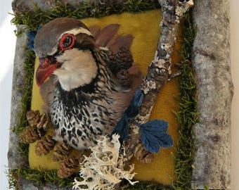 Partridge hoofd taxidermie mount