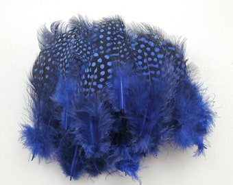 50 2-12cm Blue Guinea fowl feathers