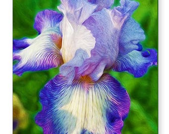 Purple Bearded Iris Flower, Photo Greeting Card, Note Card, Flower Art Print, All Occasion Card, OOAK Card, 5x7 Blank Card, Fine Art Print