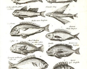 Very Rare Antique Orignal Engravings Of Fish From Merian 1657 Historiae Naturalis - Copper Engraving