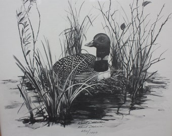 A Loon on a Nest: Kent Darwin print. Great waterbird drawing