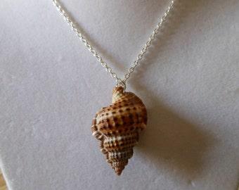 Seashell Necklace - Bursa Bursa Seashell Necklace - Brown Seashell Necklace - Seashell Pendant
