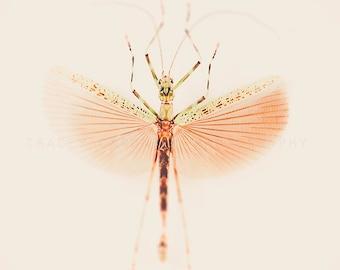 Insect Photograph, peach, sage, entomology wall art print, nature photography, pink, gardening, bug print, pastel, minimalist home decor,
