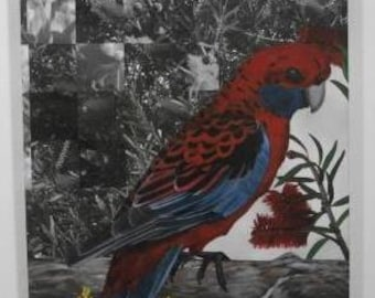Australian Flora & Fauna