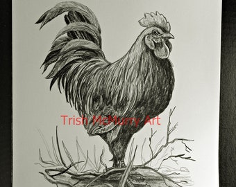 Original Rooster Art PRINT of a ROOSTER Black and White Chicken Pencil Drawing 11 inches by 14 inches