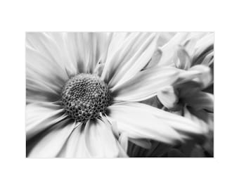 Black and White Photography, Floral Photography, Black and White Print, Black and White Art , Chrysanthemum, Nature Photography, Fine Art