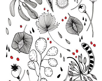 Seed Pods Print