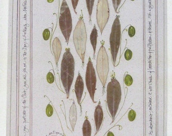 Olive print-Leaves of Antiquity