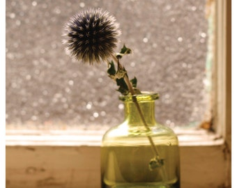 SALE Thistle in the Window - Fine Art Photograph