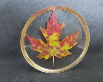 Maple Leaf Coaster 02