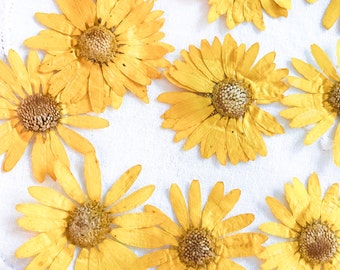 Yellow Daisies;Yellow Flowers;Daisies;Large Flowers Craft Supply 20 Dried Flowers;Pressed Flowers;Yellow;Flower Stamps;Flower Embellishments