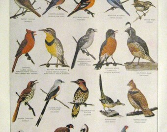State Birds Original Page Print from 1963 Noah Webster International Dictionary