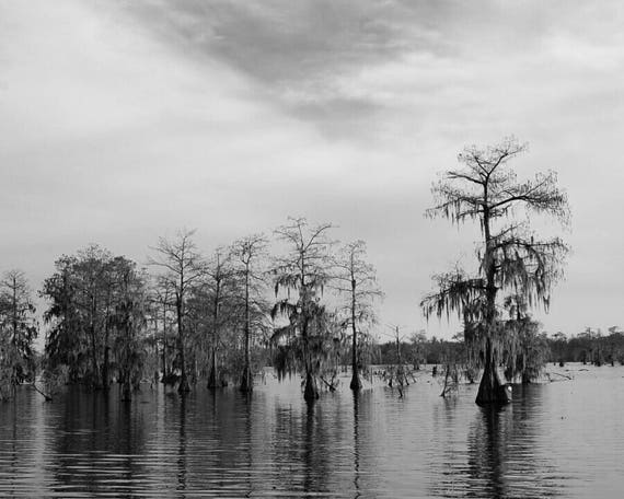 Louisiana black white photography 8x10 or 5x7 unframed
