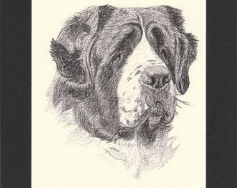 St Bernard Vintage Dog Print C.Francis Wardle Original 1935 Drawing Print Mounted with Mat St Bernard Print St Bernard Dog Mountain Dog