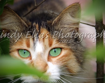 Cat Note Cards, Photo Card, Blank Photo Card, Cat Photography, Cat Blank Cards, Animal Cards, Animal Print Card, Animal Photography, Cats