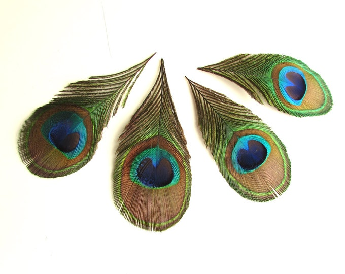 6 Peacock eye feathers trimmed, Real feathers for crafts, Trimmed feathers, Feathers for boho jewellery, Feathers for earrings