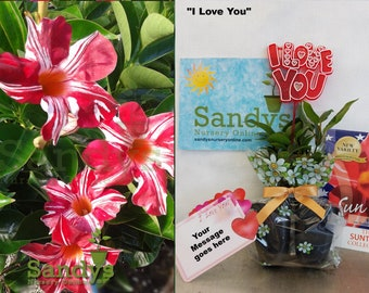 Sandys Nursery Online® All Included GIFT Package Stars & Strips 2 pack