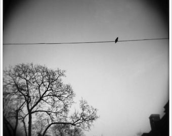 Bird on a Wire - 12x12, Limited Edition Print, Framed.