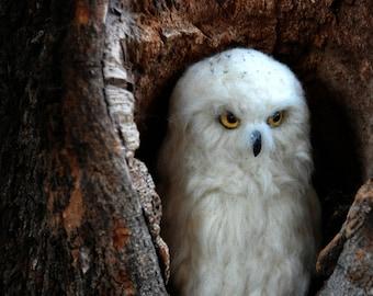 Needle Felted  Bird.  White felt Owl . Needle felted owl.