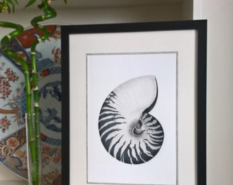 Framed Limited Edition Nautilus Seashell Giclee Print