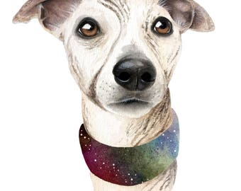 Galaxy Whippet