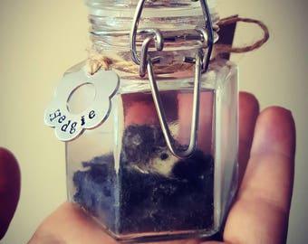 Cute little hedgehog in a jar