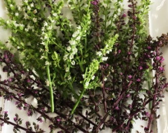 FRESH ORGANIC SHISO Flower Blossoms Branches Edible  Drinks Salads Dessert Mint large  25  branches