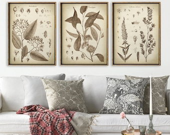 BOTANICAL PRINT SET of 3, Flower Print Set, Botanical Poster, Botanical Wall Decor, Scientific Illustration, Instant collection