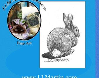 Yard Bunny Drawing