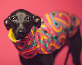 Italian greyhound clothing | cute, original blouse for italian greyhound with rainbow pattern | italian greyhound clothes