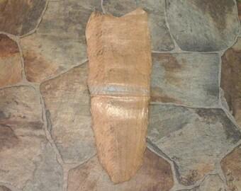 Jumbo EEL Skin