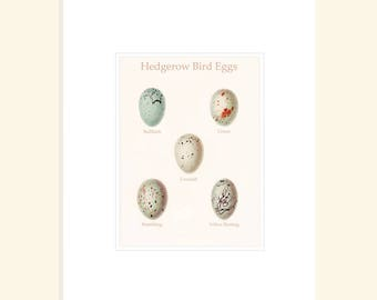 Hedgerow Bird Eggs Print, Nature Study Print Pastel Colors Speckled Bird Eggs, Natural History Gift For Her, Budget Gift for Friend