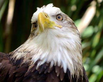 Matted Eagle Print