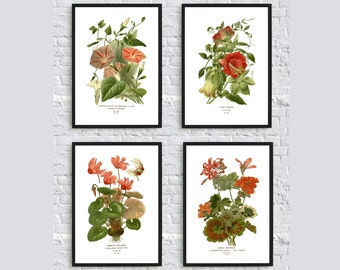 Beautiful botanical print illustration plants vintage illustration home decor wall art print SET of 4 geranium cyclamen