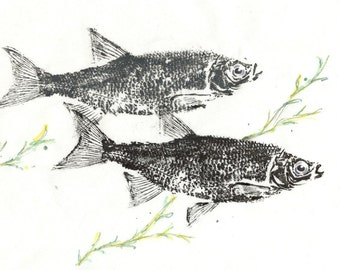 GYOTAKU fish Rubbing Two Shiners 8.5 X 11 quality Art Print Cottage Decor by artist Barry Singer
