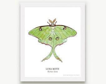 Luna Moth Print - Unmatted