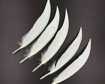 Real Goose Feathers - For Sale Light Blue Dyeing Natural Bulk Feathers,Jewelry Making,Costume Accessories,Hair Accessories Plumes 4-6 Inches