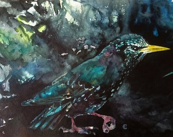 Starling/Dark Starling/Original Watercolour Starling