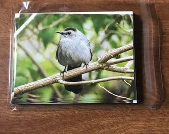 Bird Note Cards, Gray Catbird note cards, single-sided blank note cards, greeting cards, post cards, 8 photographic note cards, stationery
