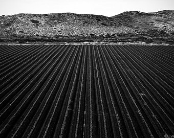"Black and White Photography - farm field harvest landscape photography black picture large wall decor 16x20 16x24 farm wall print ""Infinity"""